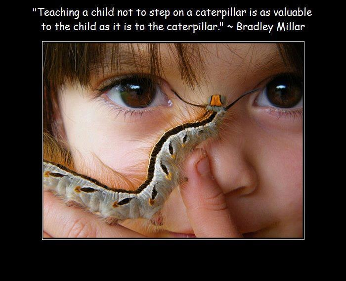 caterpillar quote with child