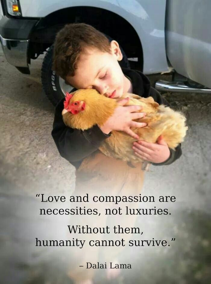 child loving chicken buddha quote