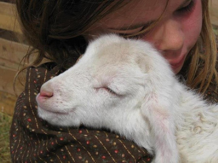 girl hugging Lamb
